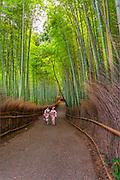 Bamboo Grove, Arashiyama, Kyoto, Japan.