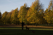 Autumn scene in Hyde Park, London, England, United Kingdom. Trees during the fall season discolour, turning yellow and brown before dropping. With low light this makes for a beautiful time of year.