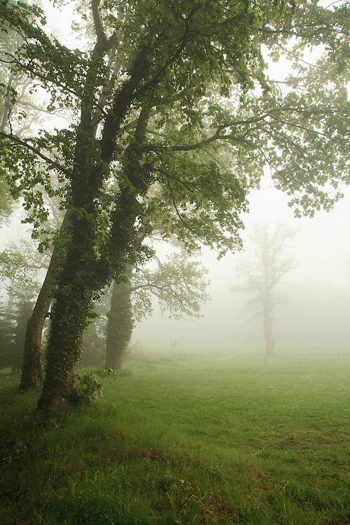 Trees in the mist, St. Dier d'Auvergne, les Martinanches, Auvergne, France