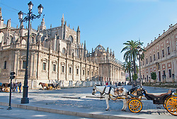 View of horse cab at Sevilla cathedral
