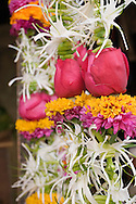 COPYRIGHT 2007 CHRISTINA SJÖGREN<br /> ALL RIGHTS RESERVED<br /> Flowers on a street market, Bombay (Mumbai), India