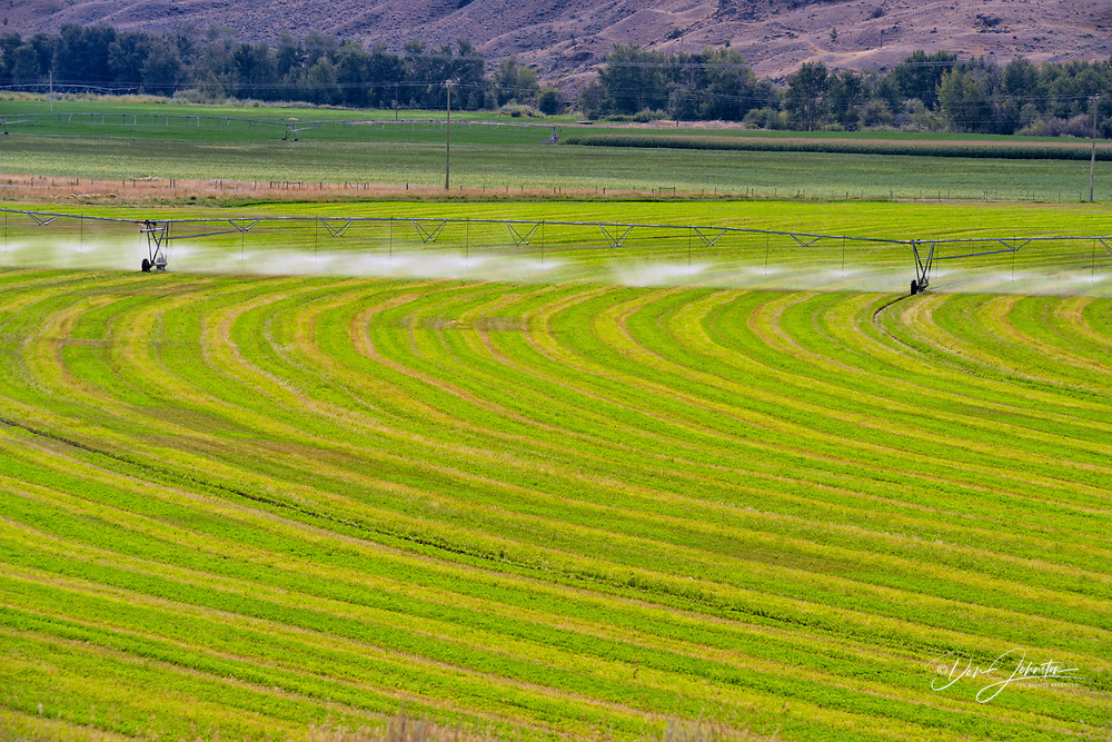 Irrigating a crop in the Thompson River Valley bottomlands, near Cache Creek, British Columbia, Canada