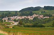 Vineyard. Pernand Vergelesses. Aloxe village. Aloxe Corton. Burgundy, France
