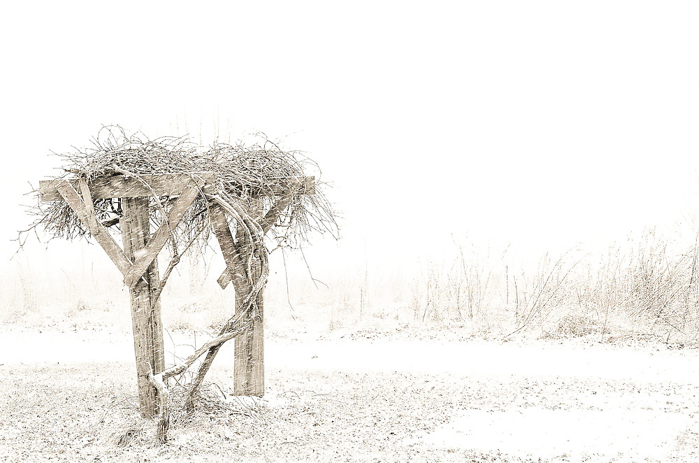 An early February snow in rural southern New Jersey covers an old grape vine.