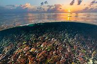 Sea Grass in Seychelles