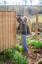 Carol Klein putting up wooden fence panels using a power drill
