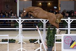 012, Nixon van't Meulenhof<br /> BWP Hengsten keuring Koningshooikt 2015<br /> © Hippo Foto - Dirk Caremans<br /> 23/01/16