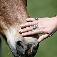 Leder Coaching med heste til Psykologi