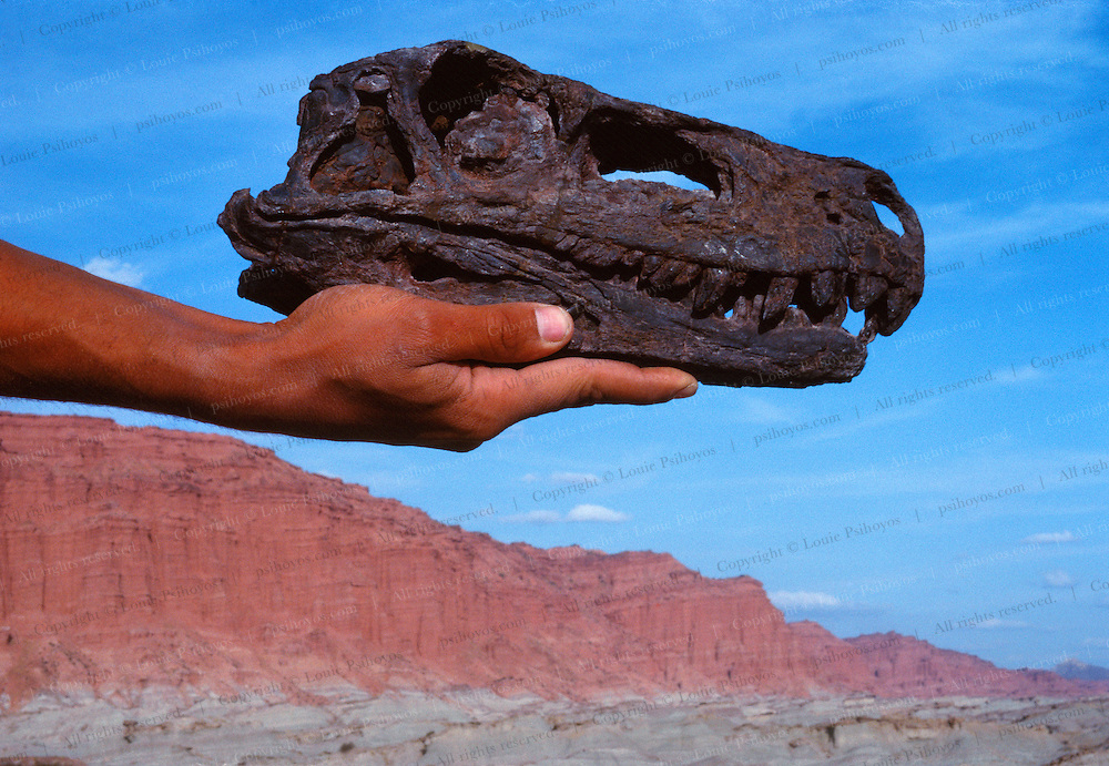 """Paul Sereno holds the skull of a Herrerasaur found in the """"Valley of the Moon"""" an area of Patagonia known to have fossils from a slice of time marking the advent of the earliest dinoaurs."""