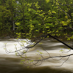 Spring along the West Branch of the Westfield River, Chester, Massachusetts.  Keystone Arch Bridges Trail.