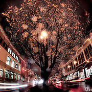 47th Street fisheye lens view of Kansas City Plaza Lights and traffic motion.