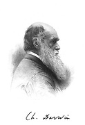 Charles Darwin (1809-1882) English naturalist. A pioneer of theory of Evolution by Natural Selection. Engraving and signature
