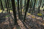 Tree shadows. Juniper Trail, in Kootenay National Park, Radium Hot Springs, British Columbia, Canada.