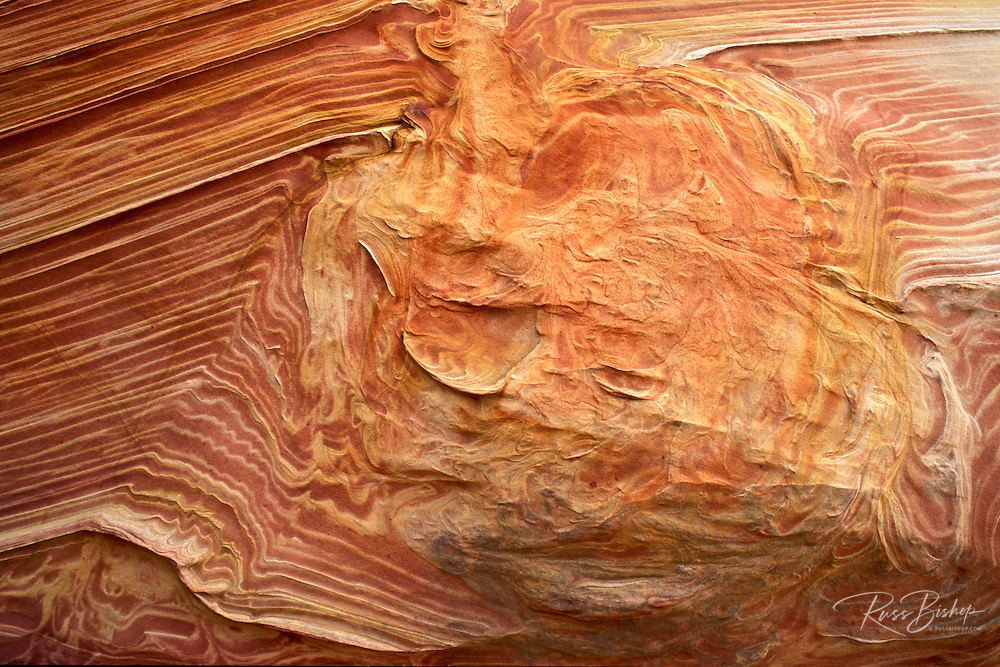 Sandstone detail at the Wave in the Coyote Buttes, Paria Canyon-Vermilion Cliffs Wilderness, Arizona