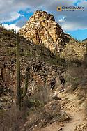 Hiking in Bear Creek Canyon with Thimble Peak in the Santa Catalina Mountains in Tucson, Arizona, USA  MR