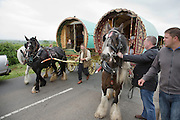 Thursday 7th June 2012 at Appleby, Cumbria, England, UK. Horse drawn bow-top wagons arrive from all over the UK on the first day of the Appleby Fair, the biggest annual gathering of Gypsies and Travellers in Europe. The wagon on the right belongs to Jim Harbour who has travelled from Essex.
