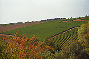 Irancy vineyard in northern Burgundy