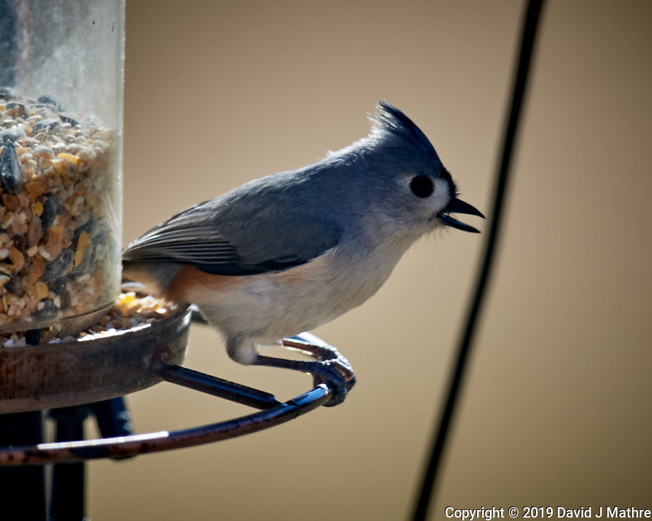 Tufted Titmouse. Image taken with a Nikon D5 camera and 600 mm f/4 VR telephoto lens (ISO 200, 600 mm,  f/4, 1/640 sec).