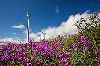 Wind turbines in a field of dwarf Fireweed, Kodiak, Alaska