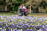 © Licensed to London News Pictures. 11/03/2015. Kew, UK. A young woman and girl (NAME NOT GIVEN) enjoy looking at the display. People enjoy the cross displays at Kew Garden's today 11th March 2015. The display features the variety Crocus tommasinianus. The Uk has enjoyed warm sunny weather this week.  Photo credit : Stephen Simpson/LNP
