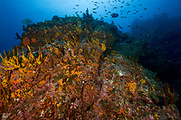 Rocky seamount covered in sponges and other invertebrate life<br /><br />Coiba Island<br />Coiba National Park<br />Panama<br />Siren's Point dive site