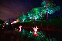 © Licensed to London News Pictures. 30/11/2018. London, UK. Trees and plants are lit by brightly coloured light at RHS Wisley Gardens. Trees and plants have been illuminated at Royal Horticulture Society Wisley Gardens for the Christmas Glow seasonal event. Hundreds of different lights can be seen when following the trail throughout the gardens opening 1 December 2018 2 January 2019. Photo credit: Peter Macdiarmid/LNP