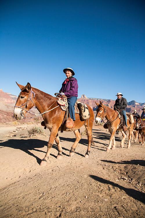 Mule team along the Grand Canyon. Grand Canyon NP, AZ.