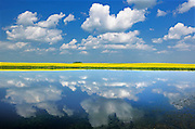 Clouds and canola reflected in wetland<br /> Wynyard<br /> Saskatchewan<br /> Canada