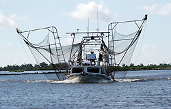 21 August 2010. Jean Lafitte, Louisiana. <br /> One of just a handful of shrimp boats, laden with nets instead of oil boom returns to fishing as the worst environmental disaster in US history continues to unfold in south Louisiana. Many shrimpers have not returned to work thanks in part to regular pay from contractors working the BP clean up operation. The disaster has taken a heavy toll on fishing. Processing plants remain closed and BP has leased many boat slips and fish landing sites that have been converted into BP oil response staging areas.<br /> Photo credit; Charlie Varley/varleypix.com