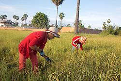 Girls Working in Rice Field