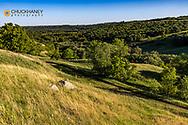 Hills in Fort Ransom State Park, North Dakota, USA