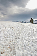 Migratory elk trail in the Shoshone National Forest Wyoming