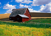 Image of a red barn and wheatfield, Palouse, eastern Washington, Pacific Northwest by Randy Wells