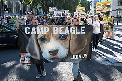 Animal rights activists calling for the closure of a site in Huntingdon which rears beagles for animal research take part in a protest on 24th September 2021 in London, United Kingdom. The activists, who are based at a camp close to the MBR Acres site, protested outside the Home Office to call for an immediate review of all animal testing and vivisection and a moratorium on the use of dogs in research.