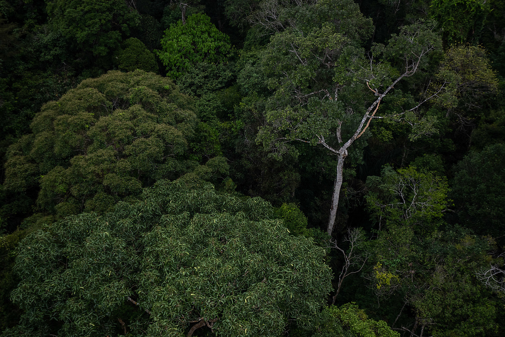 The tree canopy is seen at the Museum of the Amazonas April 3, 2021. Created in January 2009, Museum of the Amazonas sits on roughly 247 acres at the Adolpho Ducke Forest Reserve, belonging to the Instituto Nacional de Pesquisas da Amazônia [National Institute for Amazonia Research] – INPA, in Manaus, Brazil. Photo Ken Cedeno