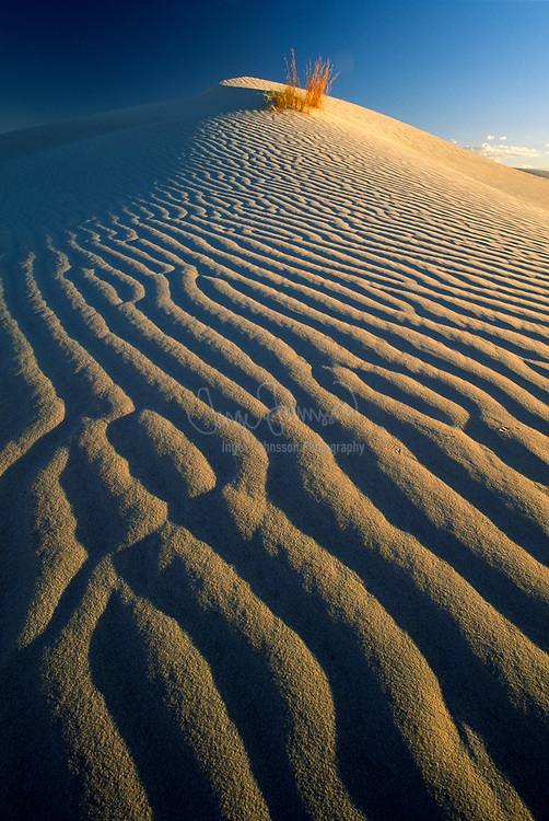 Sand dune in Guadalupe Mountains National Park in west Texas