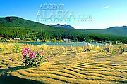Canada. Carcross Village. View from across river.