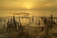 26/April/2013. Arabia Saudi. Jeddah.<br /> Atardecer en la marisma de manglares.<br /> <br /> © JOAN COSTA