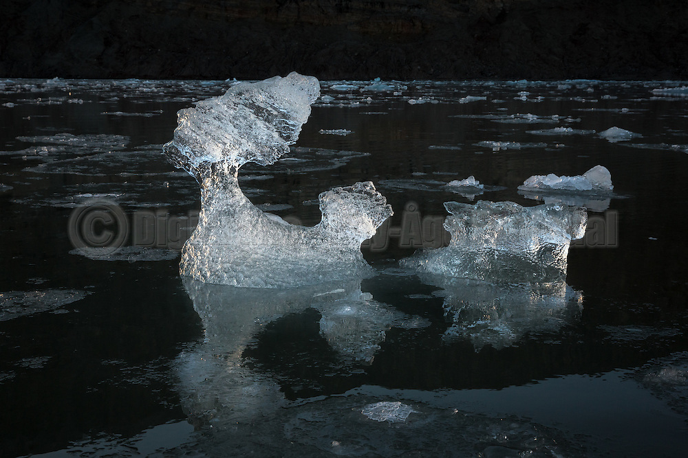 This floating lump of ice reminds me of a dog pulling a wagon. Kongsfjord, Spitsbergen |Denne flytende isklumpen minner meg om en hund som drar en vogn. Kongsfjord på Svalbard
