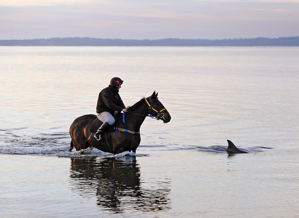 A dorsal fin might send most horses bolting for safety, but Mornington five-year-old Wantonly and rider Sarah Sycinski kept their cool when walking during this rare meet-and-greet display during a morning training session at Balnarring in Oct 2011. Sarah was astonished at the dolphin's curiosity and it was a moment in time for Sarah, a track rider from France, to treasure forever.