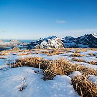 Grass emerges from melting spring snow on summit of Ryten, Moskenesoy, Lofoten Islands, Norway