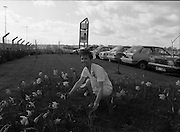 Nurse With Daffodils (Irish Cancer Society)  (R96)..1989..20.02.1989..02.20.1989..20th February 1989..At Container Agencies,Airways Industrial Estate, Dublin a consignment of daffodils arrived for The Irish Cancer Society. The daffodils will be sold to raise funds for the society in their battle against the disease which affects one in three of the Irish population...Image shows a nurse from the cancer society amid daffodils growing within the grounds of Container Agencies, Airways Industrial Estate.