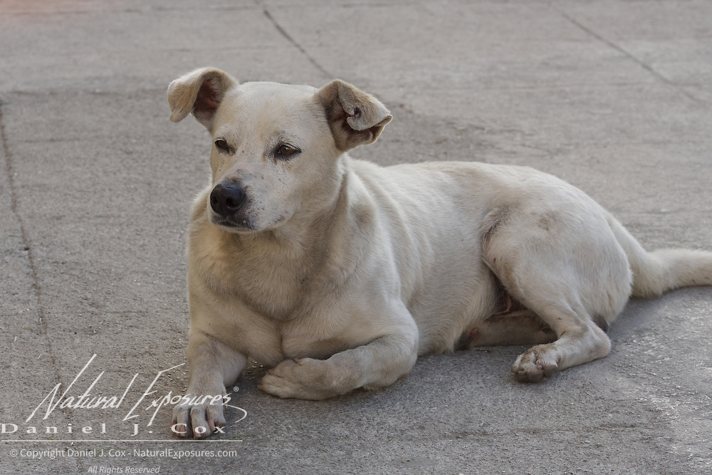 A local dog takes it easy on the streets of Havana, Cuba.