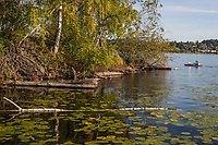Marsh Island, Union Bay