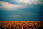 Onweerslucht boven graanlandschap, provincie Gauteng, Zuid Afrika
