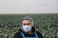 CALEXICO, CA - JANUARY 22: A Farmworker in a Broccoli field  on January 22, 2021 in Calexico, California. , President Joe Biden unveiled an immigration reform proposal offering an eight-year path to citizenship for some 11 million immigrants in the U.S. illegally as well as green cards to upwards of a million DACA recipients and temporary protected status to farmworkers already in the United States.(Photo by Sandy Huffaker/Getty Images)