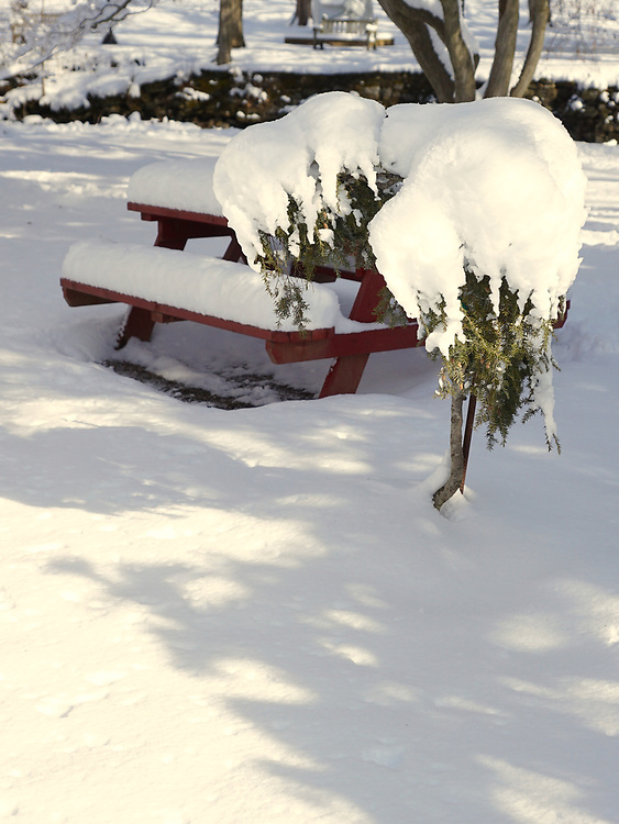 Snow, Reading Public Museum and Arboretum, Reading, PA