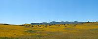 Northern CA Wildflowers (62686 x 25385 pixels)