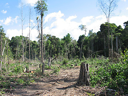 June 21, 2007 - U.S. - A patch of recently deforested Amazon rain forest is cut out of the jungle June 21, 2007, near Tailandia, Brazil. Brazil is the world's fourth biggest emitter of greenhouse gases, largely due to deforestation. (Jack Chang/TNS) (Credit Image: © Jack Chang/TNS/ZUMAPRESS.com)