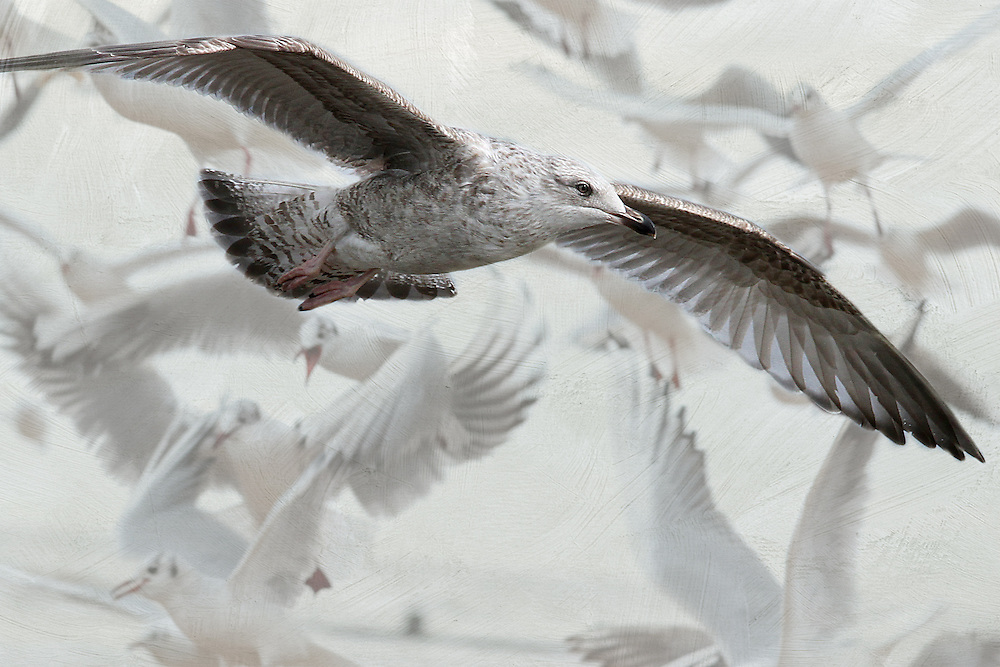 Seagull Ballet is one of my digital art prints, merging two of my images to create one beautiful one.